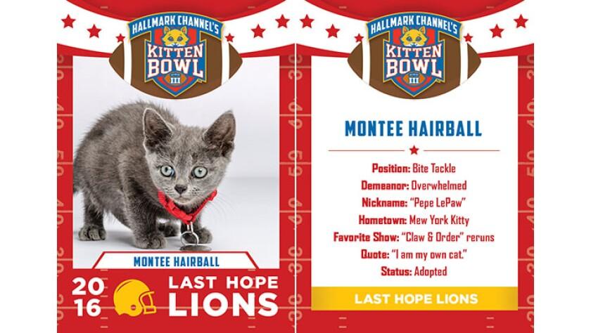 MonteeHairball-lions-KBIII.jpg