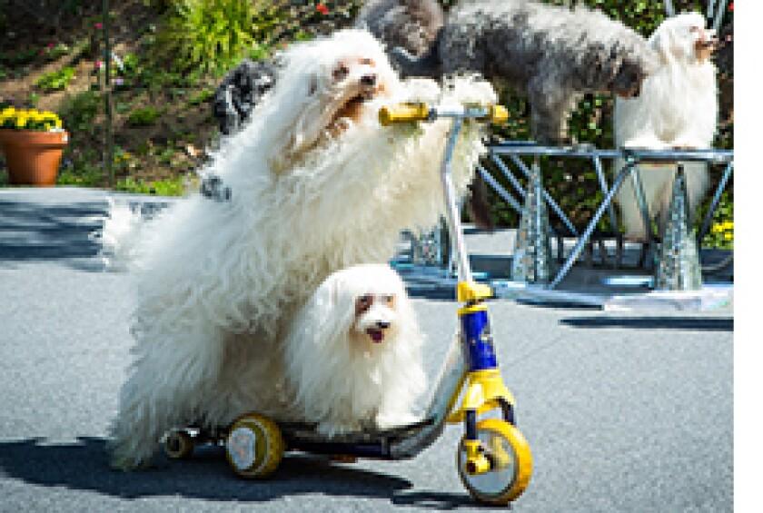 Image: http://images.crownmediadev.com/episodes/Medias/RichText/H&F-Ep1130-Segment-Olate-Dogs.jpg