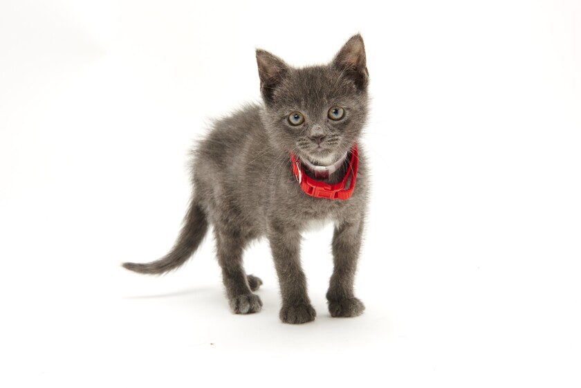 Kitten Bowl IV Photos - Boomer's Bobcats - 9