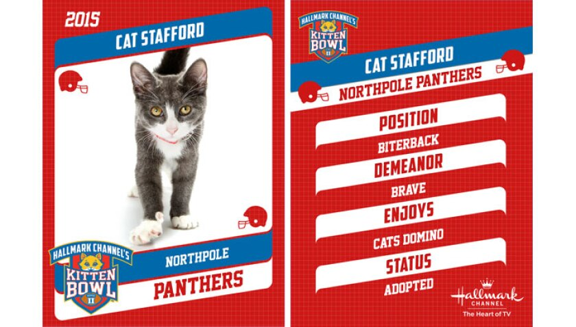 cat-stafford-profile