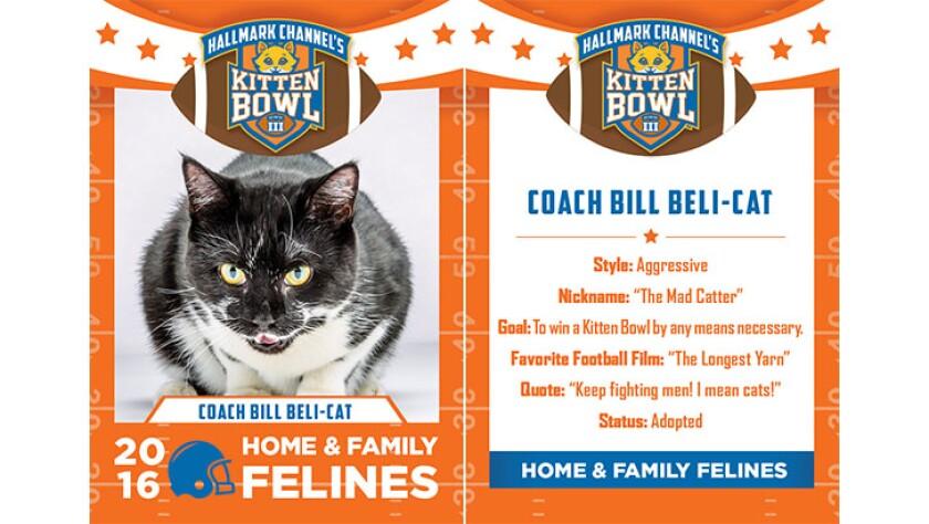 CoachBillBeliCat-felines-KBIII.jpg