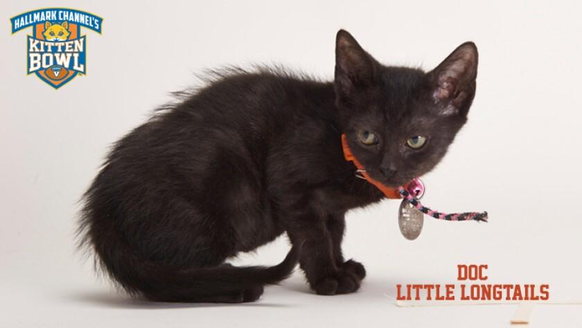 meet-the-kittens-KBV-LL-Doc.jpg