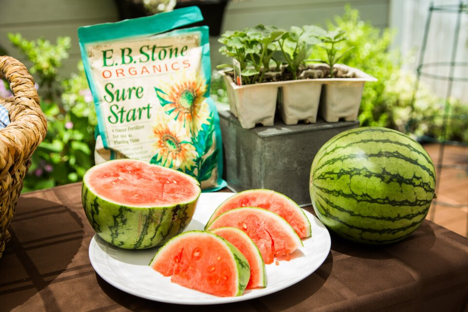hf5185-product-watermelon.jpg