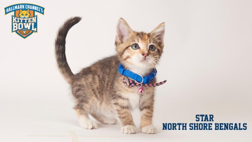 meet-the-kittens-KBV-NSB-Star.jpg