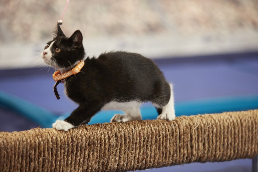 Check out photos from the Kitten Summer Games event, Gymnastics.
