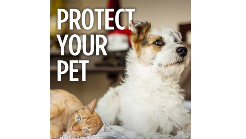 061019-protect-your-pet.jpg