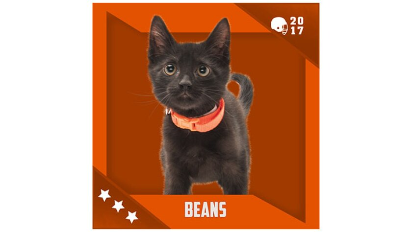 Kitten Bowl IV Emojis - Home & Family Felines - Beans