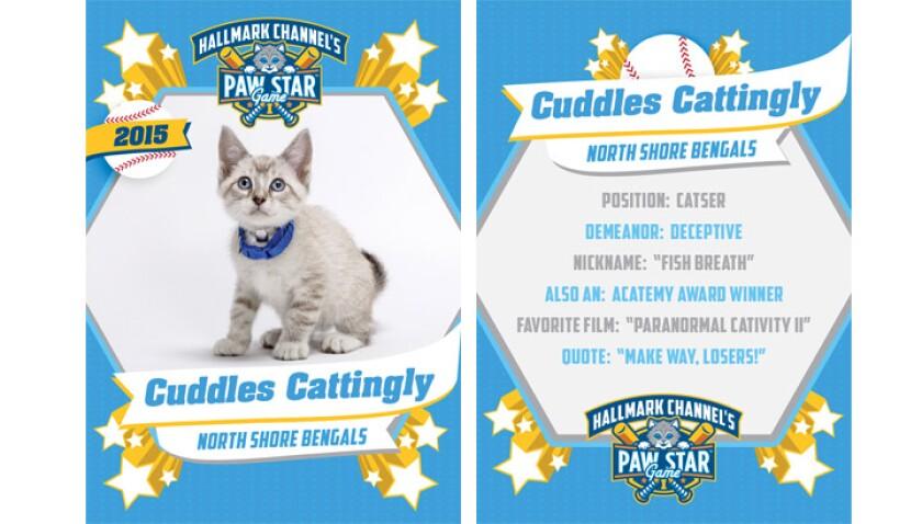 paw-star-cuddles-cattingly-2015