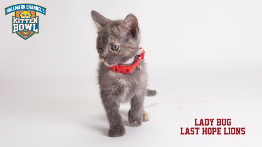 meet-the-kittens-KBV-LHL-Lady-Bug.jpg