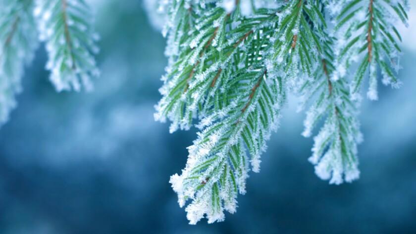 Christmas-Land-temp-listicle-C2C.jpg