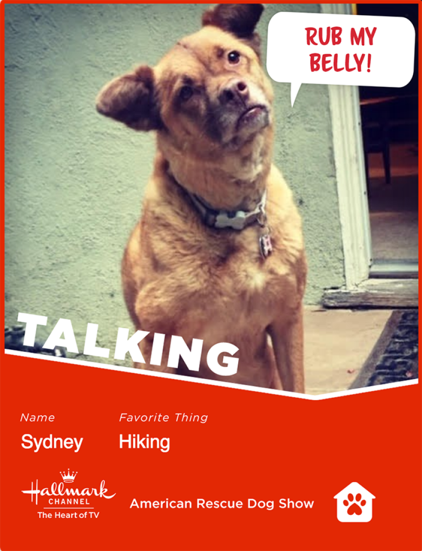 Sydney-talking.png
