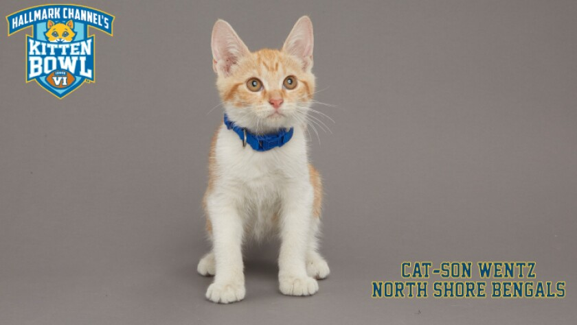 NB-Cat-son_Wentz-meet-the-kittens-KBV.jpg