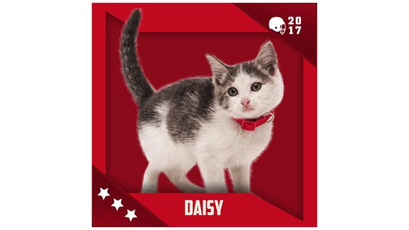 Kitten Bowl IV Emojis - Boomer's Bobcats - Daisy