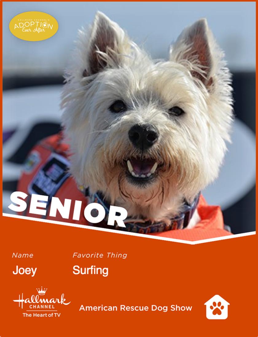 Joey-senior.png