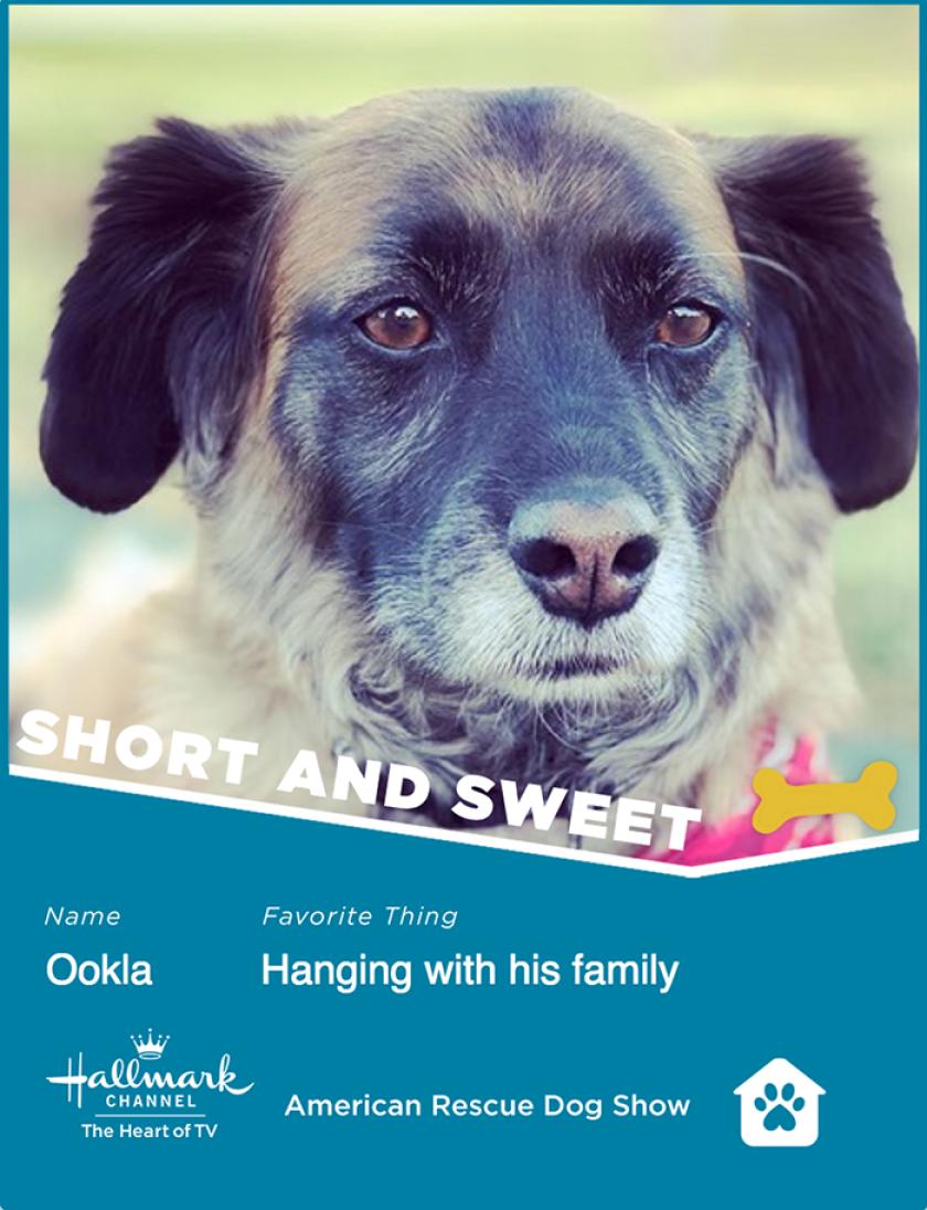 Ookla-ShortSweet.png