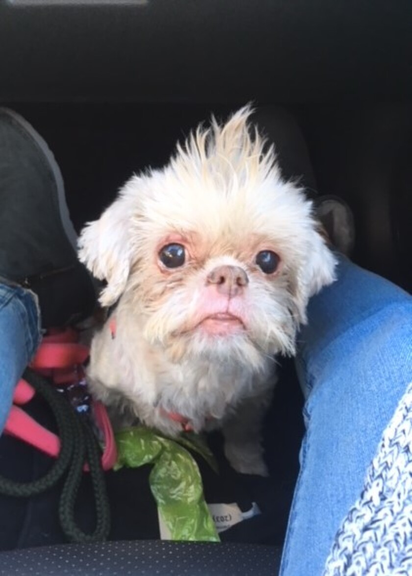 Photos - Meet Ginger - Special Needs Category