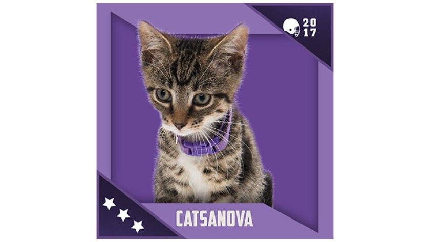 Kitten Bowl IV Emojis - North Shore Bengals - Catsanova