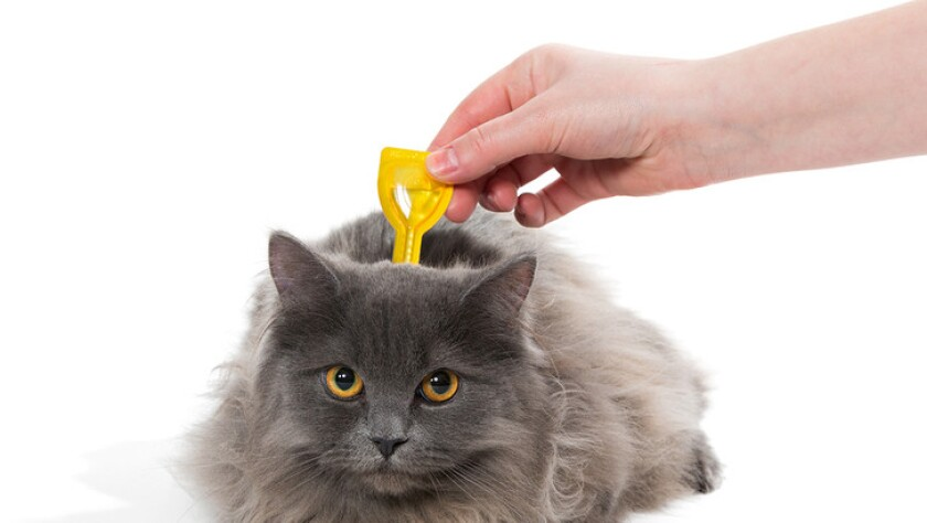 Happy and Healthy Cat Care - 10