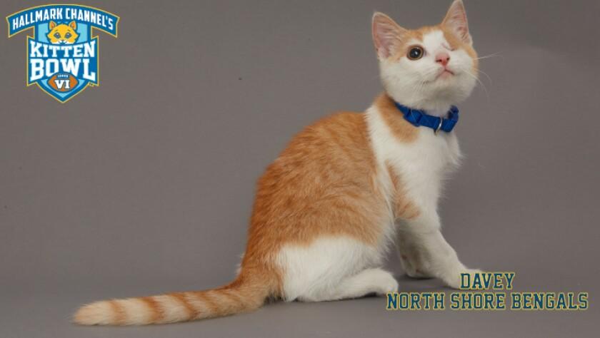 NB-Davey-meet-the-kittens-KBV_tmp653377265
