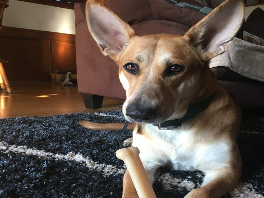 Winnie 6_Ears.JPG