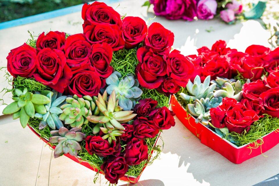 hf4104-product-roses.jpg