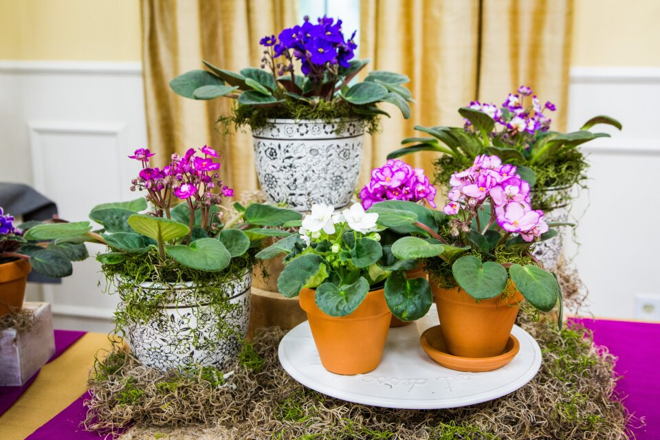 How to Use a Wicking Cord to Water/Fertilize Your African Violets