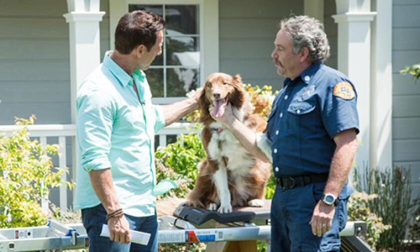 Image: http://images.crownmediadev.com/episodes/Medias/RichText/HF-Ep1173-rescue-dog-2.jpg