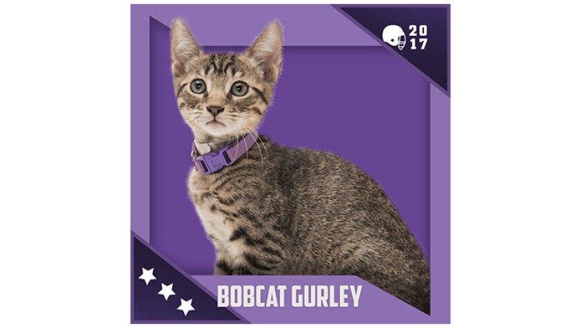 Kitten Bowl IV Emojis - North Shore Bengals - Bobcat Gurley