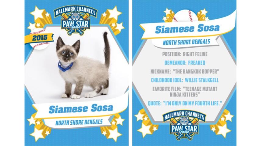 paw-star-siamese-sosa-2015