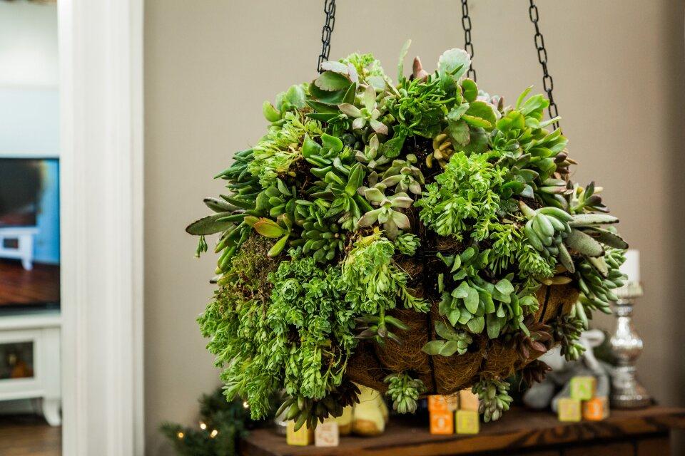 DIY Succulent Ball