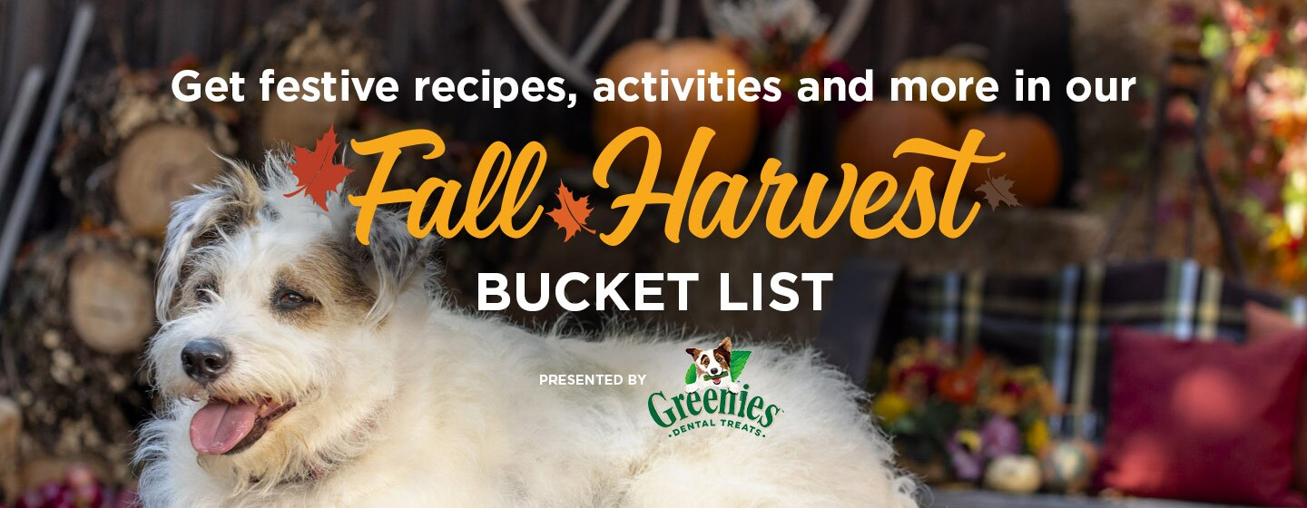 DIGI20_Greenies_FallBucketList_Graphics_DynamicLead_1440x560_R01.jpg