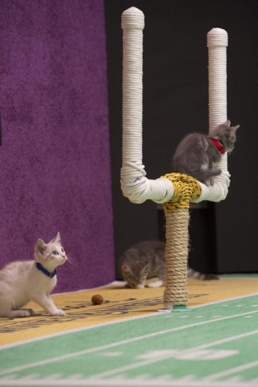 KittenBowl2_077