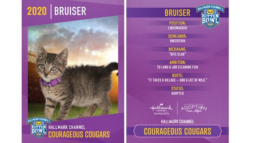 CC-Bruiser.jpg