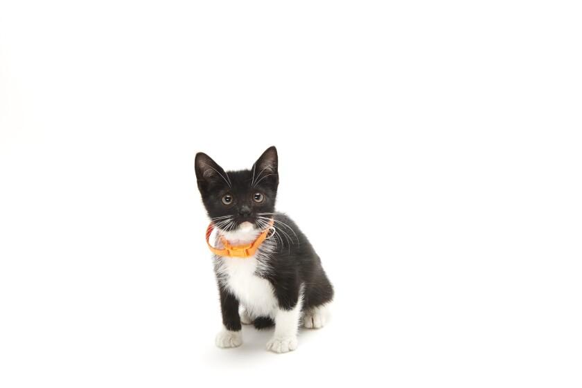 Kitten Bowl IV Photos - Home & Family Felines - 4