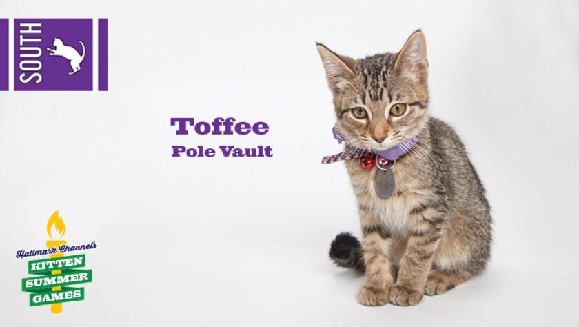 KittenSummerGames_726x410_Toffee.jpg