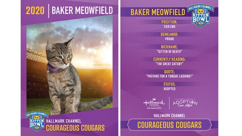 CC-Baker-Meowfield.jpg