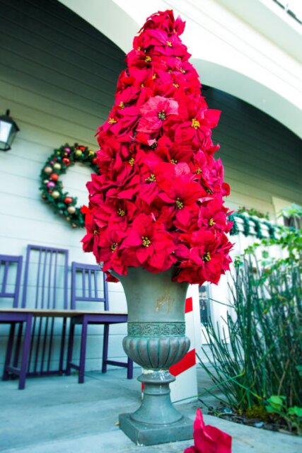 Ken Wingard's DIY Poinsettia Entry Tree