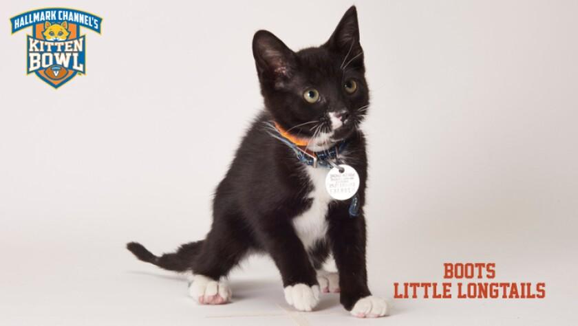 meet-the-kittens-KBV-LL-Boots-1.jpg
