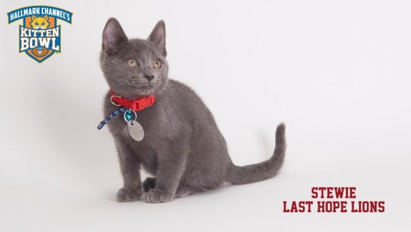 meet-the-kittens-KBV-LHL-Stewie.jpg