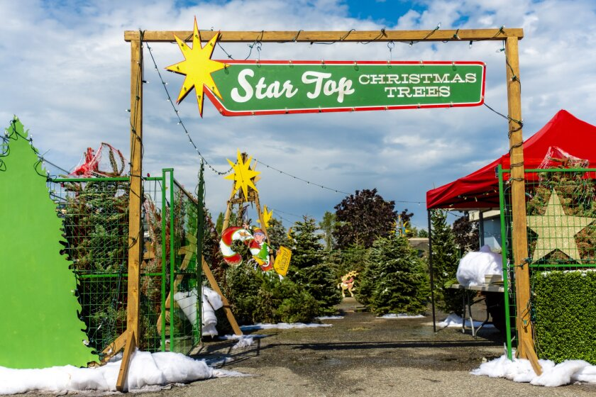 Photos from Christmas Under The Stars | Christmas Under The Stars