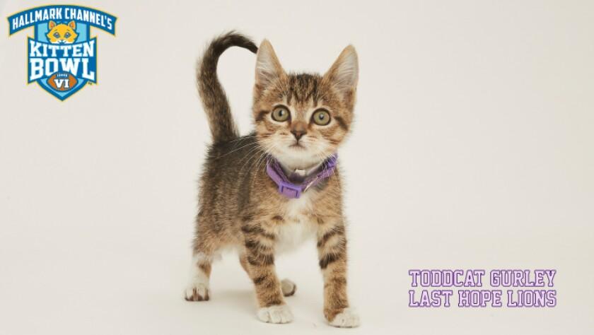 PP-Toddcat_Gurley-meet-the-kittens-KBV.jpg