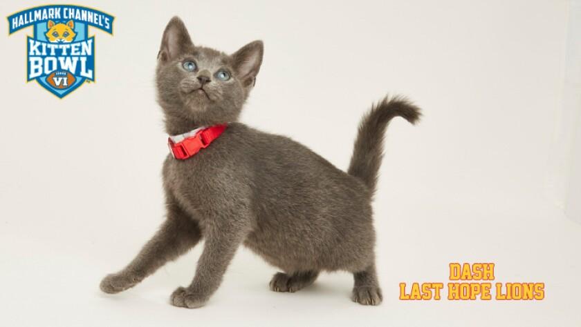 LHL-DASH-meet-the-kittens-KBV.jpg