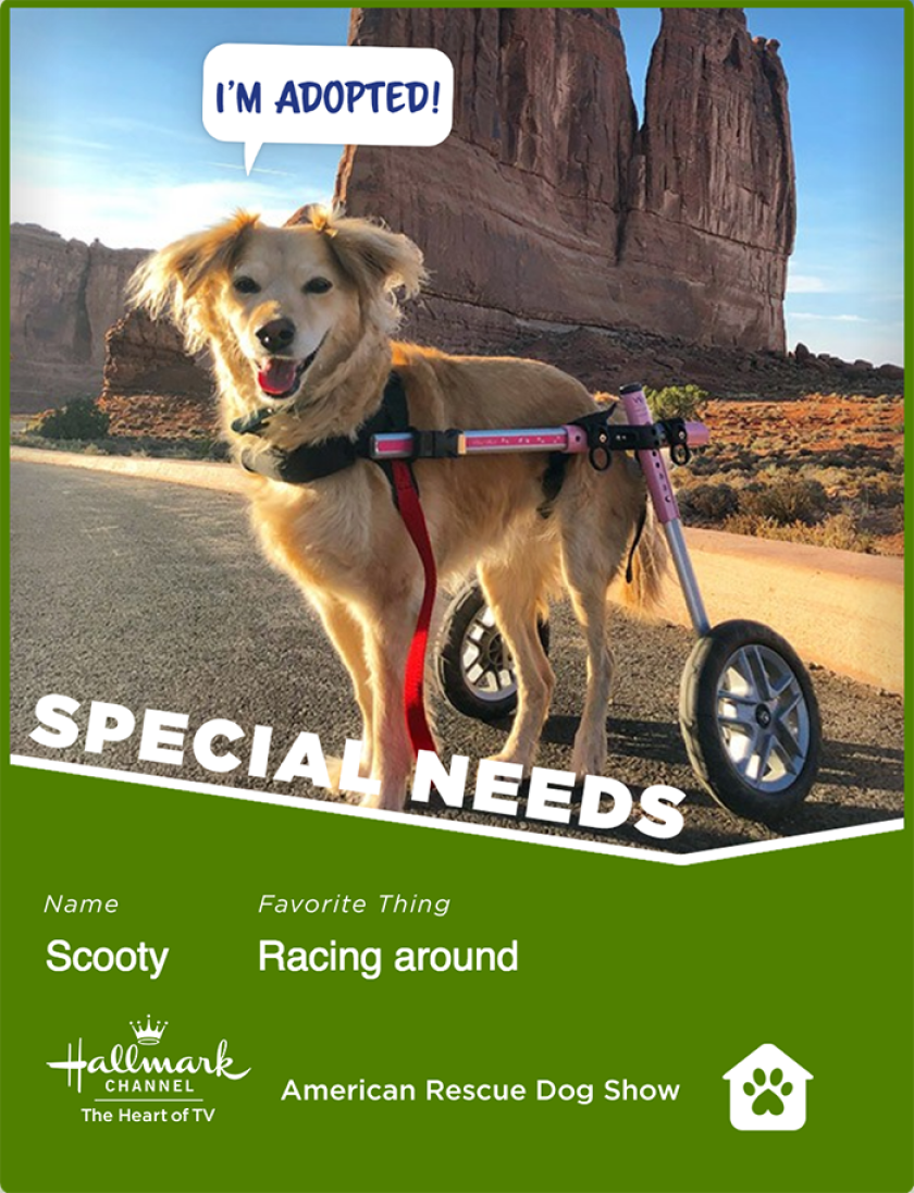Scooty-specialneeds.png