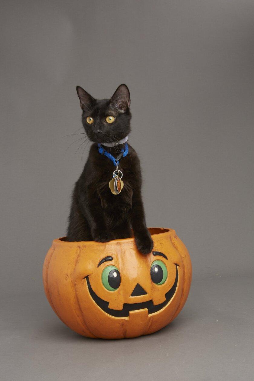 Kitten Bowl VI: Fall Kittens - 2