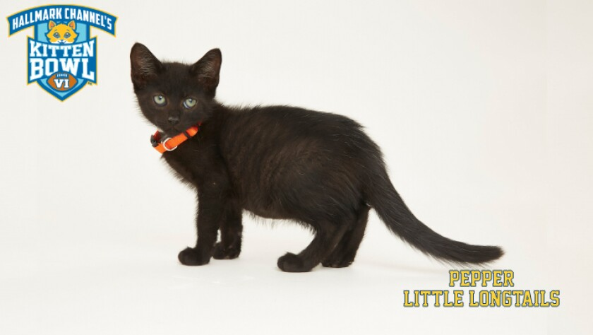 LL-Pepper-meet-the-kittens-KBV.jpg