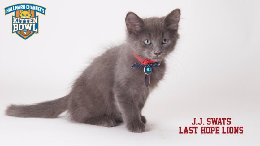 meet-the-kittens-KBV-LHL-JJ-Swatts.jpg