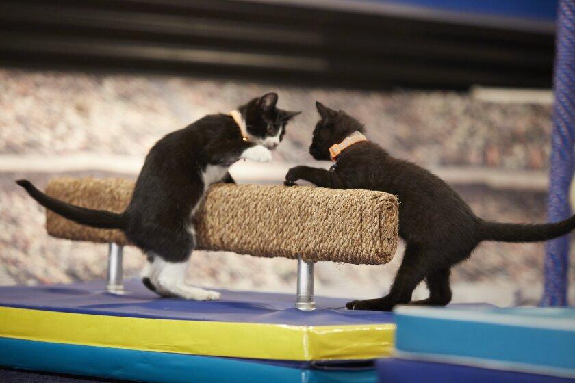 KittenSummerGames_0071.jpg