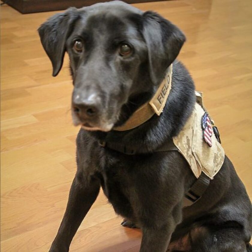 American Humane Hero Dog Awards 2018 Finalist - Sgt. Fieldy - Military