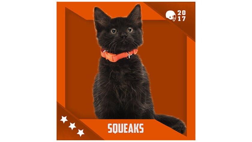 Kitten Bowl IV Emojis - Home & Family Felines - Squeaks