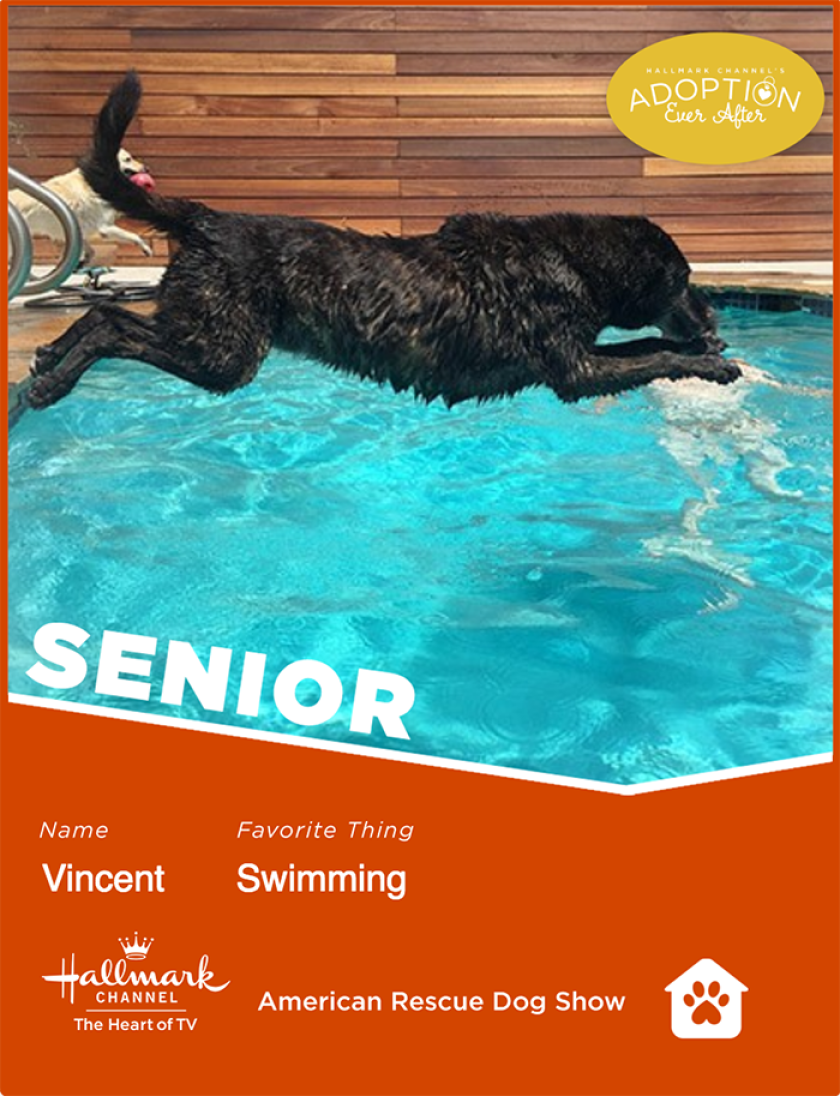 Vincent-senior.png